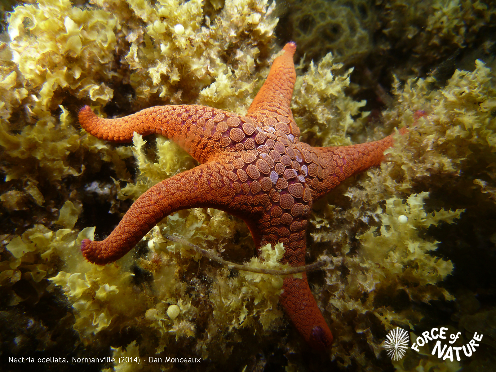 Call for entries: Underwater South Australia photography exhibition (Fleurieu Edition)